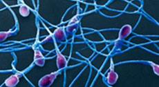 Normalan broj spermatozoida je 20 miliona/ml, a da bi do trudnoće došlo polovina od ovog broja mora biti pokretna